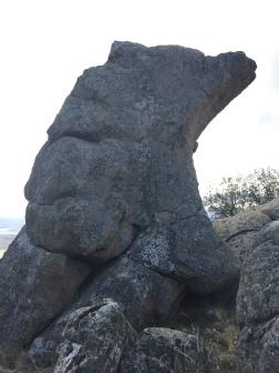 perfil de oso